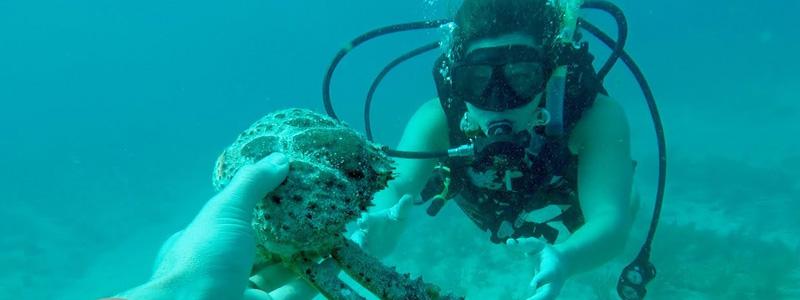 Florida Keys Diving Vacation