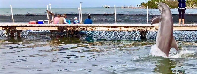 Best Swim with Dolphins Florida Keys